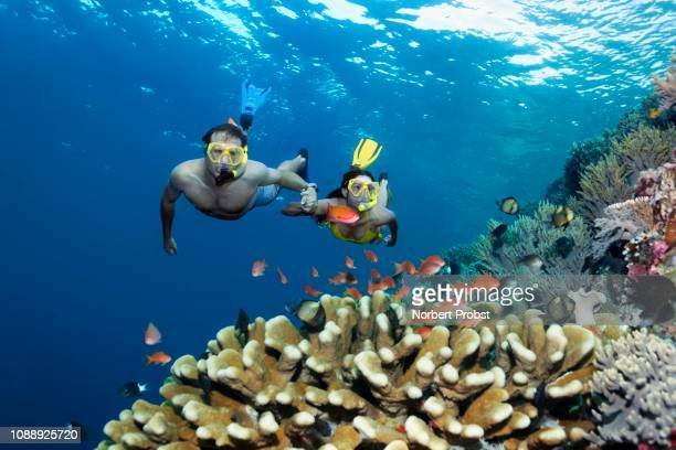 pair, snorkeler, dives hand in hand over coral reef, looks at fish, flagfishes (anthiadinae) reeffish, great barrier reef, pacific - great barrier reef stock pictures, royalty-free photos & images