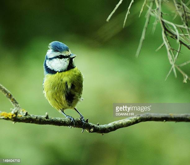 pajaro silvestre - fauna silvestre stock pictures, royalty-free photos & images
