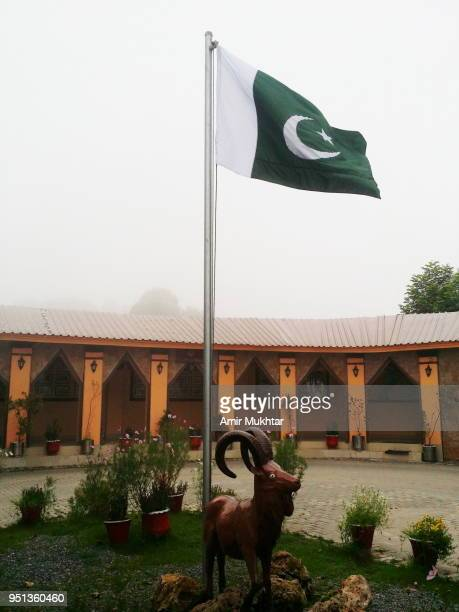 pakistan flag waving - markhor stock photos and pictures