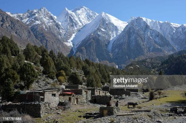 pakistan, gilgit baltistan area, nagar valley, minapin, the high snowy mountains of the rakaposhi range dominate the little hamlet of tagaphari - beatrice valli foto e immagini stock