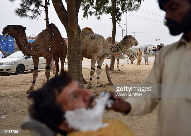 A Pakistani barber shaves a customer beside camels at the one of the main animal markets setup for the forthcoming sacrificial Eid AlAdha festival in...