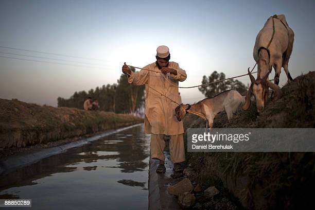 Pakistani boy internally displaced from Swat leads his goats to water and grass growing on the side of the canal at the Yar Hussain UNHCR camp in...