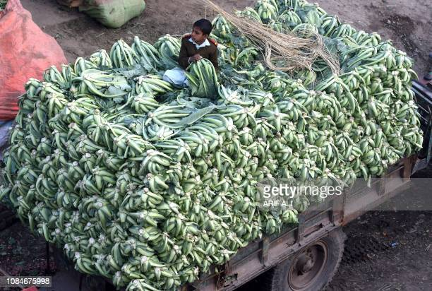 A Pakistani boy sits on a tractor loaded with cauliflowers as he arrives at the vegetable market in Lahore on January 18 2019