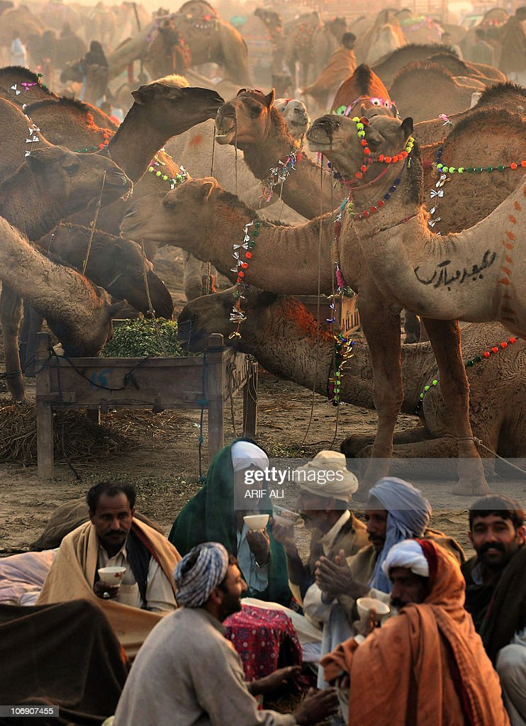 Pakistani camel sellers drink tea at a sacrificial livestock market ahead of the Muslim festival Eid al-Adha in Lahore on November 15, 2010. Eid al-Adha, which commemorates biblical patriarch Ibrahim's (or Abraham's) acceptance of God's command to sacrifice his son Ismail (or Ishmael), falls on the 10th of Dhul al-Hijja on the Islamic calendar. As Ibrahim was allowed to sacrifice a ram instead, Muslim families mark the day by ritually sacrificinga sheep, goats, cows and other livestock, the meat of which is also shared with the needy. AFP PHOTO/Arif ALI