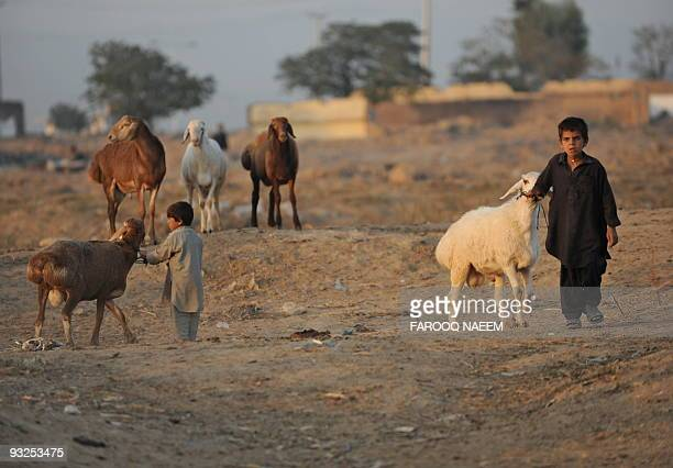 Pakistani children lead animals to a market set for Muslim festival Eid alAdha in Islamabad on November 20 2009 Muslims across the world are...
