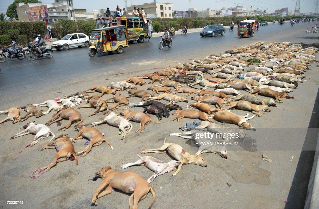 PAKISTAN-HEALTH-ANIMAL : News Photo