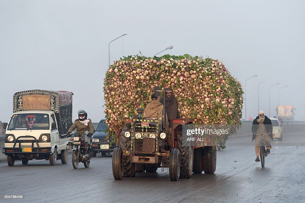 Pakistani farmer drives a tractor trolly loaded with radishes on the way to the vegetable market in Lahore on January 13, 2016. AFP PHOTO / ARIF ALI / AFP / Arif Ali
