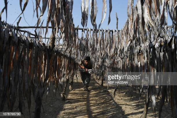 Pakistani fisherman Bashir Ahmed carries dry fish after being hanged from poles at a fishing village in the port city of Karachi on January 7 2019