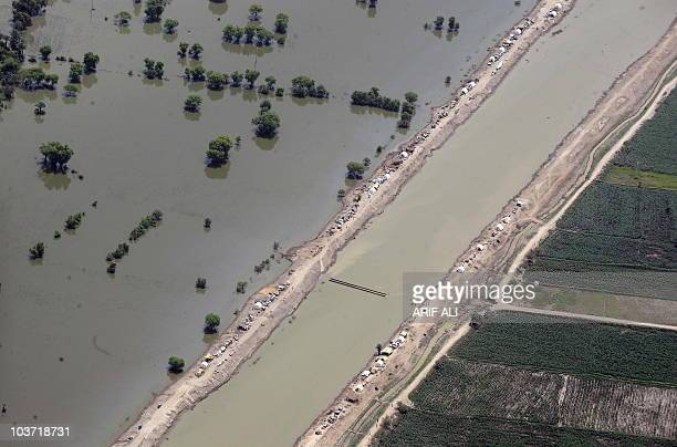 Pakistani flood survivors take shelter on the high ground at the flooded area of Rojhan District in Dera Ghazi Khan Division on August 27 2010 The...