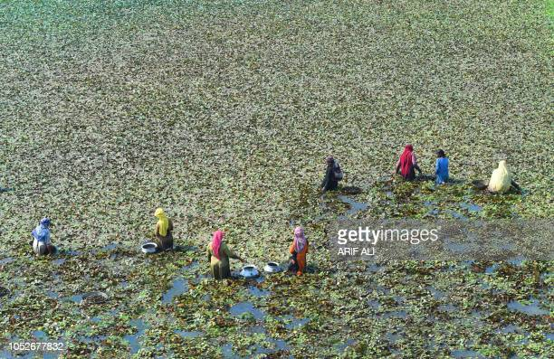 TOPSHOT Pakistani labourers harvest water chestnut from a field in Lahore on October 21 2018 Pakistan's finance minister promised on October 20 to...