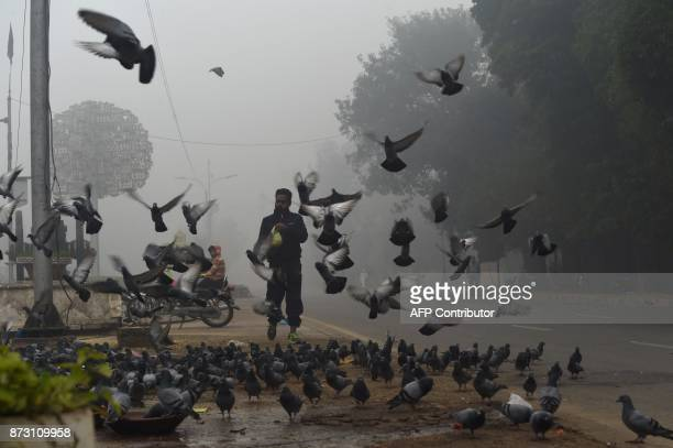 A Pakistani man feeds pigeons on a street amid heavy smog in Lahore on November 12 2017 Large swathes of Pakistan and north India see a spike in...