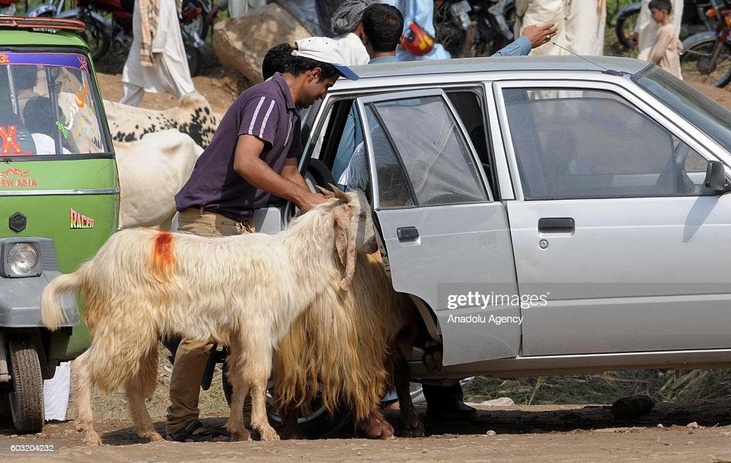 Eid al-Adha in Pakistan : News Photo