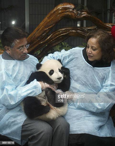 Pakistani President Pervez Musharraf and his wife Sehba hold a panda at Chengdu giant panda breeding center on February 23 in Chengdu Sichuan...