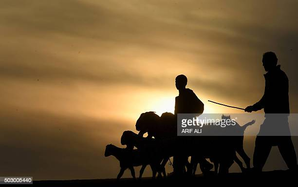 Pakistani shepherds herd their goats in front of the final sunset of 2015 in Lahore on December 31 2015 AFP PHOTO / Arif ALI / AFP / Arif Ali