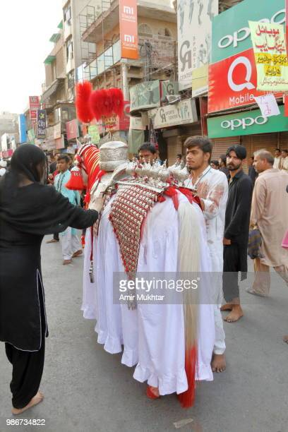 Pakistani Shia Muslims touching the symbolic horse of Hazrat Imam Hussain for respect and sawab (Reward) during a Muharram procession