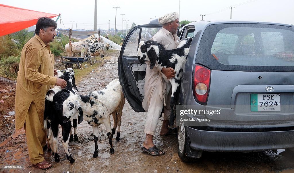 Goat Market In Pakistan