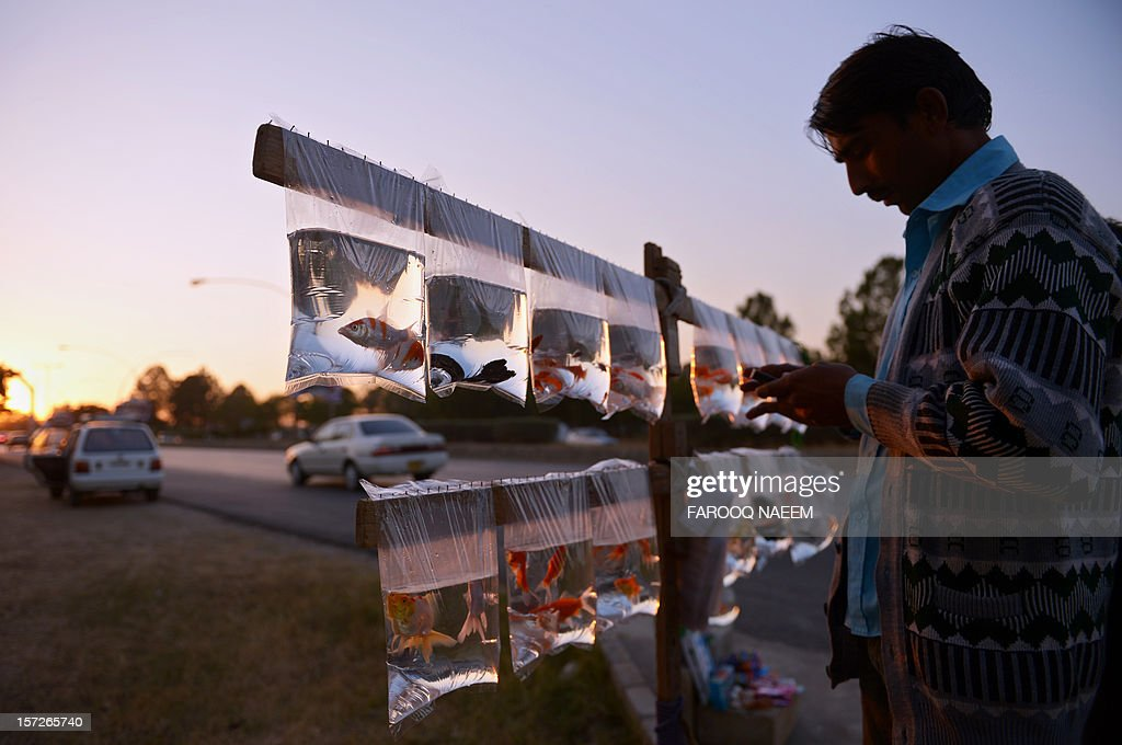 A Pakistani vendor looks at his mobile phone at a roadside fish stall in Islamabad on December 1, 2012. Pakistan's growth remains too weak, underlying inflation is high and the trade balance is heading in the wrong direction, the IMF said in a statement. AFP PHOTO/Farooq NAEEM