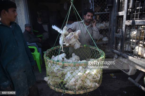 Pakistani vendor weighs chickens outside his shop at a market in Rawalpindi on January 31 2017 / AFP PHOTO / FAROOQ NAEEM