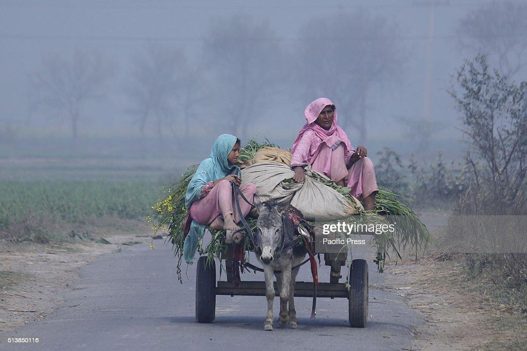 Pakistani  villager women going to field in a village near... : News Photo