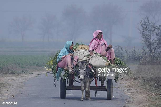 AREA LAHORE PUNJAB PAKISTAN Pakistani villager women going to field in a village near the Wahga Border Area ahead of the International Women's Day...
