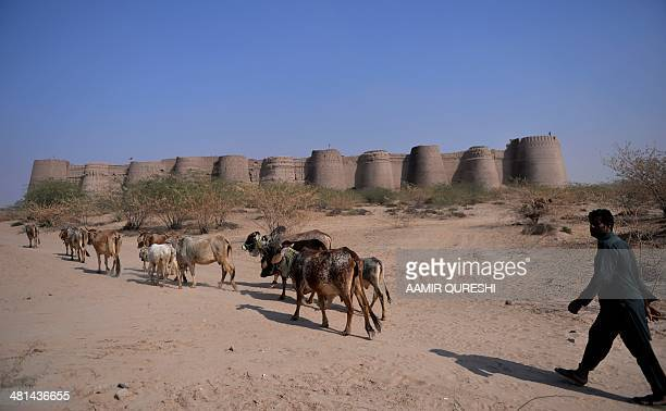 WITH 'PakistanLifestyleTourismDesertAuto' FEATURE by Khurram SHAHZAD This photograph taken on February 16shows a Pakistani shepherd walking with his...