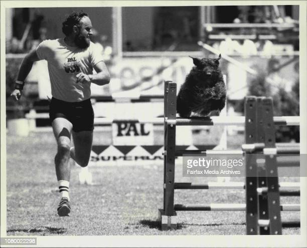 Pal Superdog Dog Jumping ContestWinnerHandler Hank Plenke and his Bouvier Des Flandres rare in Australia Good for general jobs like guard duties and...