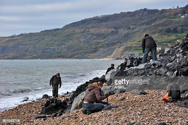 Palaeontologists and tourists looking for fossils on beach after landslide at the Black Ven between Lyme Regis and Charmouth along the Jurassic Coast...