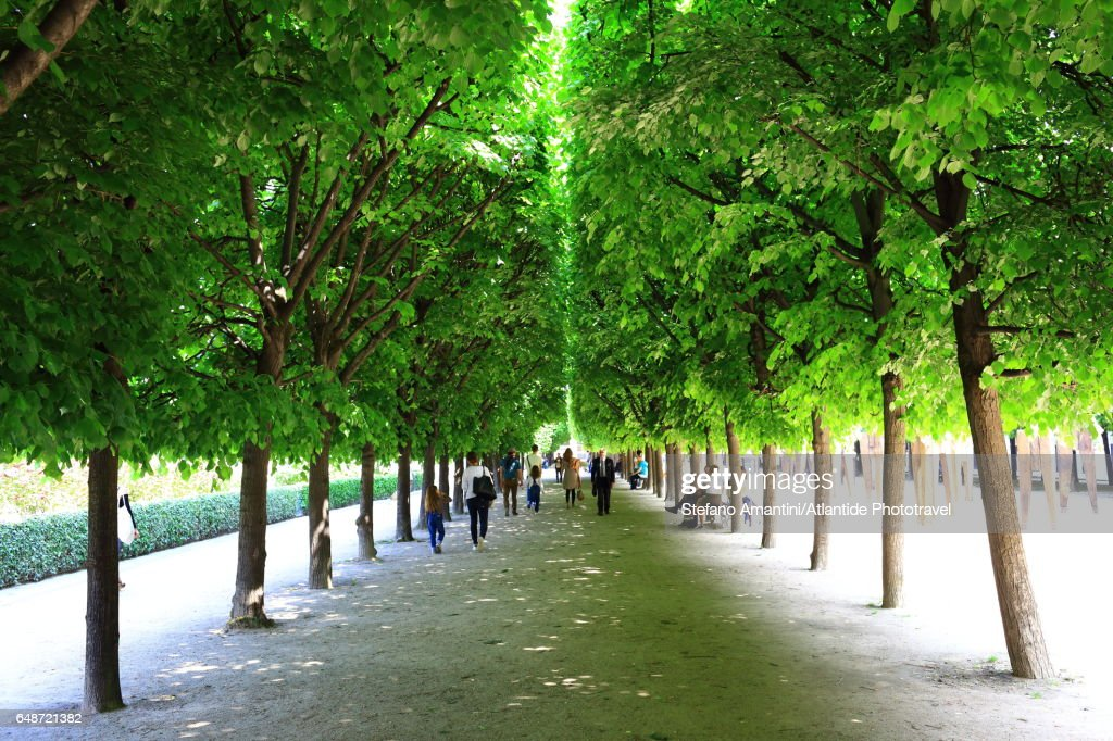 Palais Royal, the garden : Stock Photo