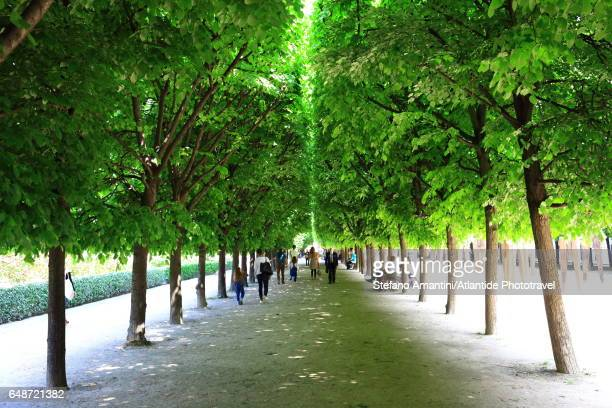 palais royal, the garden - palais royal stock pictures, royalty-free photos & images