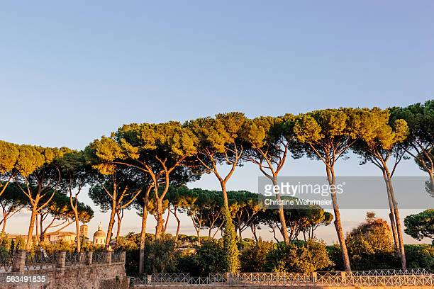 palatine hill - christine wehrmeier stock photos and pictures
