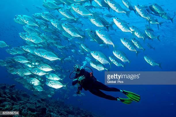 Palau - Micronesia