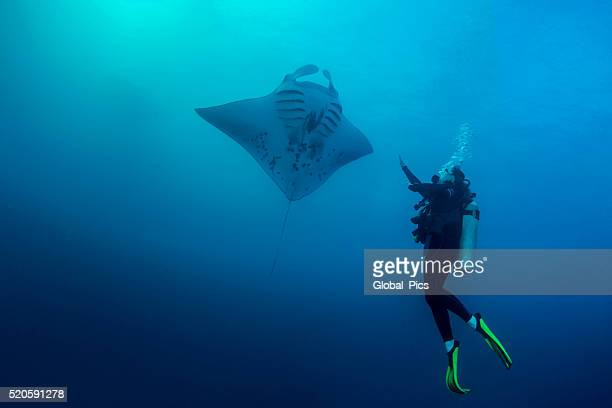 palau-micronesia - dasiatide foto e immagini stock