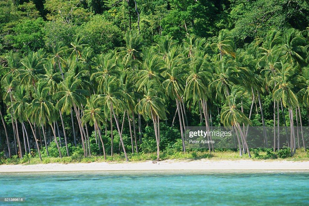 Palawan Island, Philippines (near El Nido) : Stock Photo