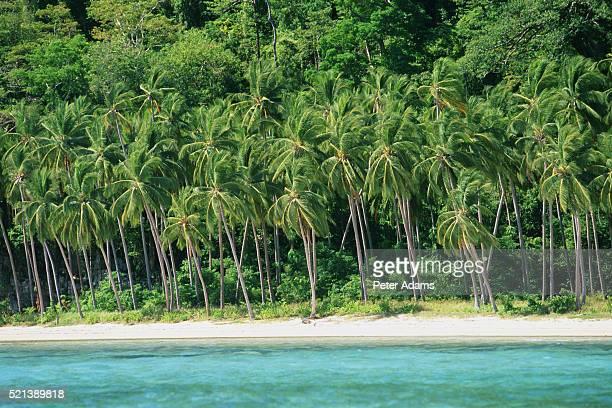 Palawan Island, Philippines (near El Nido)