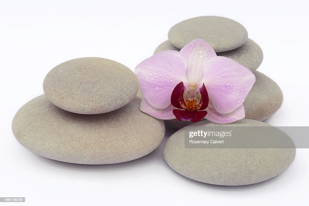 Pale pink and magenta orchid on smooth pebbles : Stock Photo