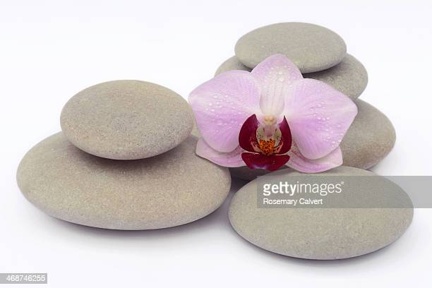 Pale pink and magenta orchid on smooth pebbles
