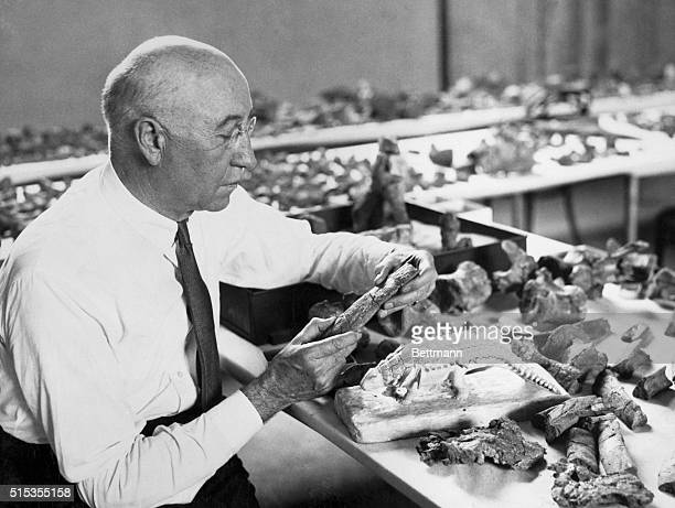 Paleontologist Barnum Brown works on a model of an ankylosaur
