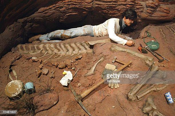 paleontologist stock photos and pictures getty images