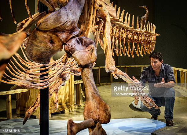 Paleontologist Paul Sereno right examines the marquee display as the National Geographic is unveiling the Spinosaurus exhibit on Friday on September...