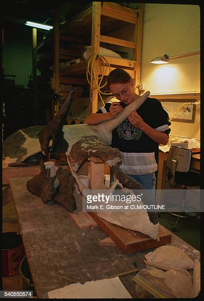 Paleontologist with Triceratops Fossil