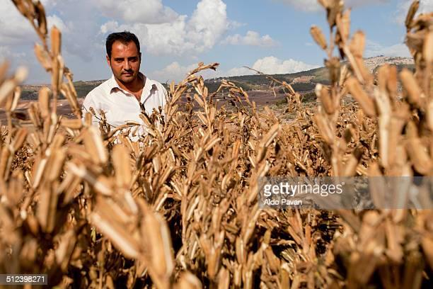 palestine, jenin, zababdeh village - sesame stock pictures, royalty-free photos & images