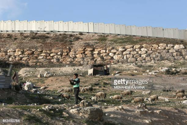 A Palestinian Bedouin boy of the Jahalin tribe walks in the middle of a flock of sheep in the tribe's camp located next to Israels controversial...