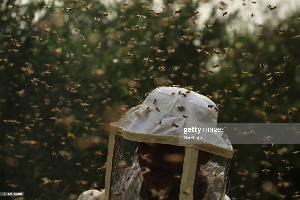Collecting Honey In  Gaza Strip