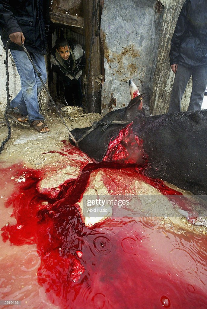 Palestinians Celebrate Eid Al-Adha By Slaughtering Animals : News Photo