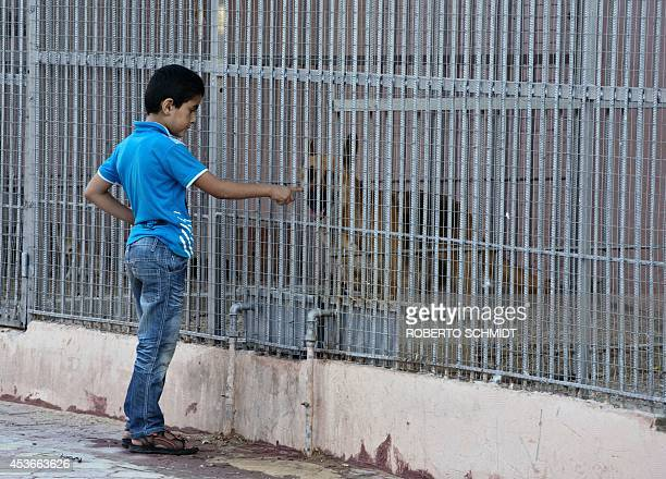 Palestinian boy plays with a German Shepherd the Jabalia zoo on August 14 2014 Completed just six months ago the Jabalia park's exhibits range from...