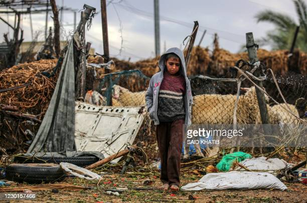 Palestinian boy walks barefoot near a sheep enclosure in the Araiba refugee camp on rainy day, in Rafah in the southern Gaza Strip, on December 16,...