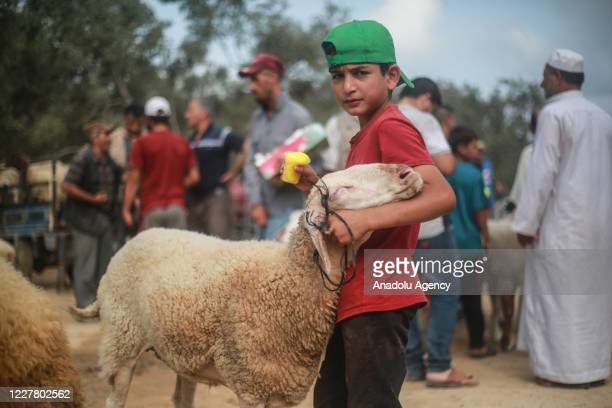 Palestinian breeders wait with the sacrificial animals at a livestock market ahead of Eid alAdha also called as Feast of the Sacrifice the second of...