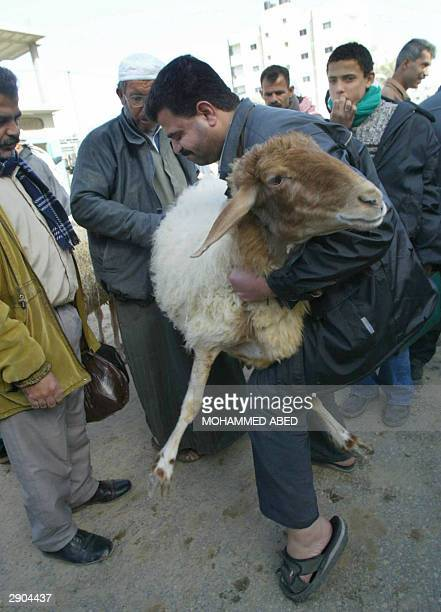 Palestinian butcher shows a sheep to customers as they prepare for the upcoming Muslim Eid alAdha holiday in a market in Rafah refugee camp in the...