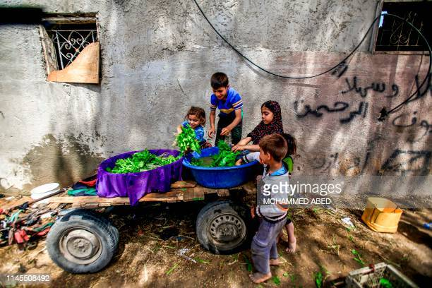 TOPSHOT Palestinian children help their father sort through arugula produce before he heads to sell it at a market in an impoverished area in Beit...