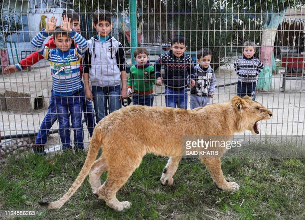 Palestinian children look through the bars of a cage at the declawed lioness Falestine at the Rafah Zoo in the southern Gaza Strip on February 12...
